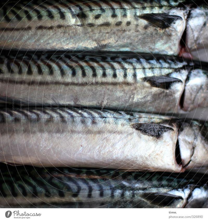 Esswahn | Friday Ritual Food Fish Nutrition Dead animal Scales Mackerel 4 Animal Glittering Desire Death Appetite Pain Disappointment Debauchery Roast