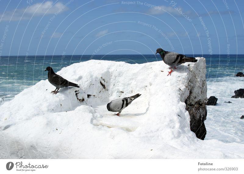 Sky Nature Blue Water White Summer Ocean Animal Clouds Environment Coast Bright Rock Natural Bird Waves
