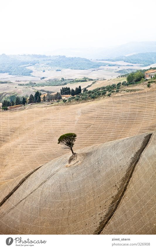 tuscany tree Nature Landscape Earth Autumn Tree Field Italy Tuscany Esthetic Infinity Sustainability Natural Dry Brown Green Contentment Attentive Calm Longing