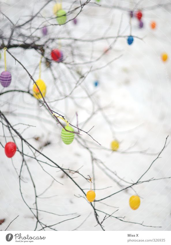 spring Feasts & Celebrations Easter Spring Snow Multicoloured Easter egg Decoration Loneliness Hang plastic eggs Branch Twig Bushes Colour photo Exterior shot