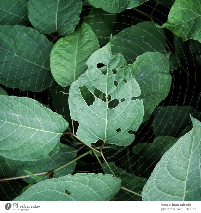 green plant leaves textured in the nature, green background Plant Leaf Green Garden Floral Nature Natural Decoration Abstract Consistency Fresh Exterior shot