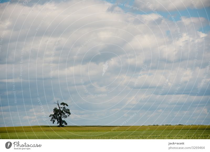 farsighted and alone in a wide open field Landscape Air Sky Clouds Summer Climate change tree Field Müritz Authentic Free natural Warmth Moody Endurance