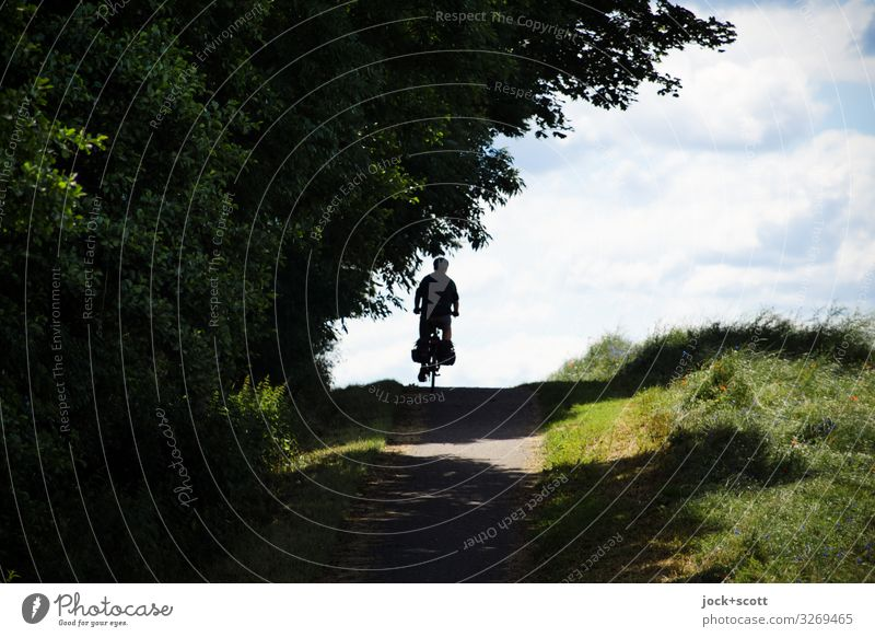 tour in the country Trip Masculine 1 Human being Clouds Summer Beautiful weather tree Meadow hillock Bicycle Relaxation Driving Free natural Positive Emotions