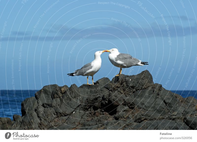 Sky Nature Blue Water Summer Ocean Clouds Animal Environment Coast Natural Bright Bird Pair of animals Elements Wing
