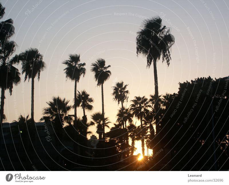Sky Tree Sun Palm tree Glow