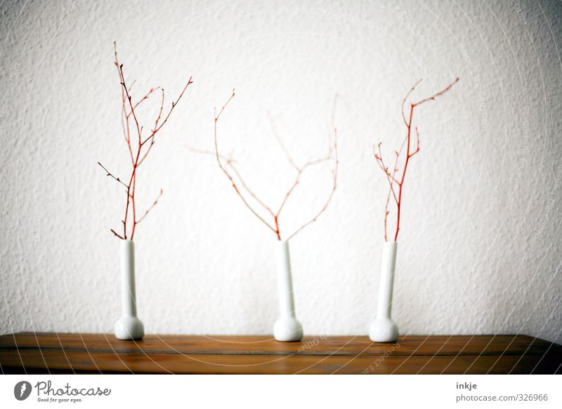 White Red Wall (building) Autumn Wall (barrier) Brown Room Living or residing Gloomy Decoration Table Transience Change Branch Tilt Seasons