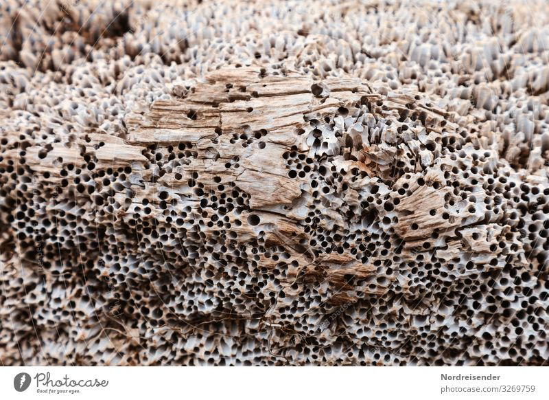 Shipworm in old wood Coast Ocean Navigation Wood Maritime Bizarre Puzzle Wood pest Pests Brittle Old Vintage Patina Structures and shapes Surface