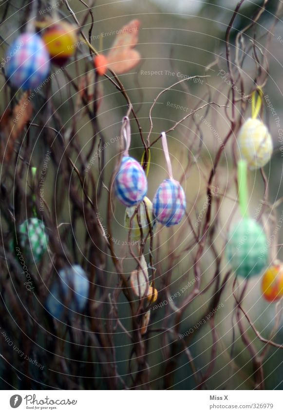 Easter Decoration Spring Bushes Hang Multicoloured Easter egg Branch Twigs and branches Embellish Colour photo Exterior shot Close-up Deserted
