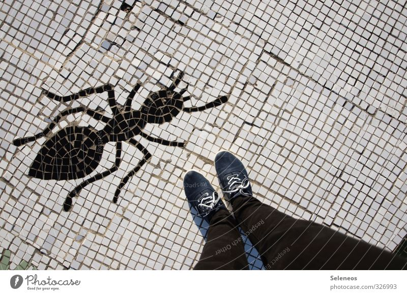 on Human being Legs Feet 1 Pants Jeans Footwear Animal Ant Insect Stone Sign Threat Large Small Creativity Art Nature Mosaic Colour photo Exterior shot Day