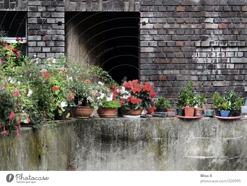 wall Living or residing Flat (apartment) Decoration Flower Blossom Pot plant Garden Wall (barrier) Wall (building) Balcony Blossoming Dirty Decline Farm