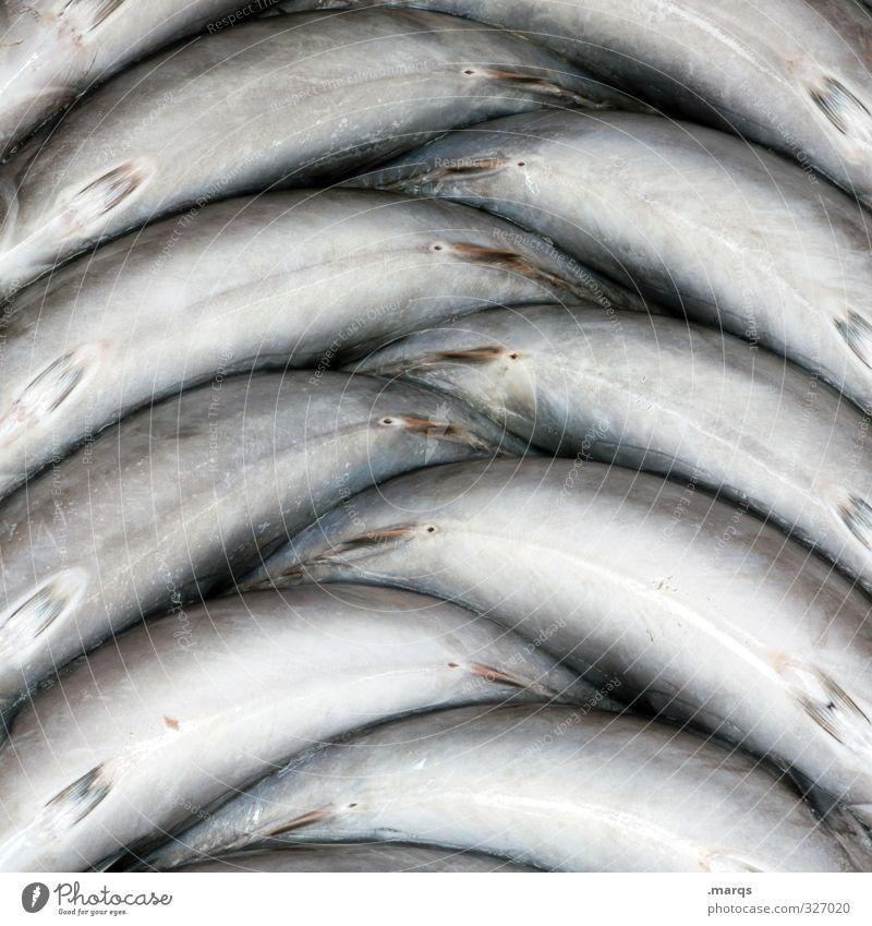 Beautiful Lie Food Arrangement Nutrition Simple Fish Organic produce Markets Symmetry Market stall Fish market