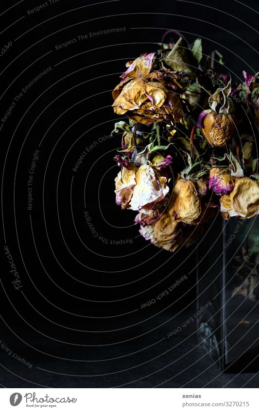 lost / withered roses in glass vase Rose Blossom Vase Glass Old Dry Brown Yellow Green Pink Black Death Shriveled Limp Die of thirst xenias Interior shot