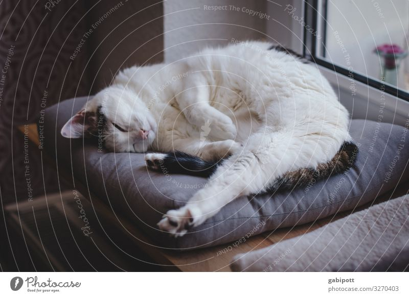 1200 - first rest Animal Pet Cat Relaxation Lie Sleep Dream Old Natural Cute Original Soft Serene Break Innocent Transience Living or residing Colour photo
