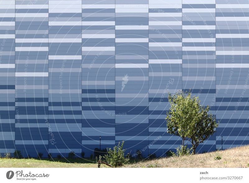 Fifty Shades of Blue Tree Meadow Town Downtown Outskirts House (Residential Structure) High-rise Industrial plant Wall (barrier) Wall (building) Facade Line