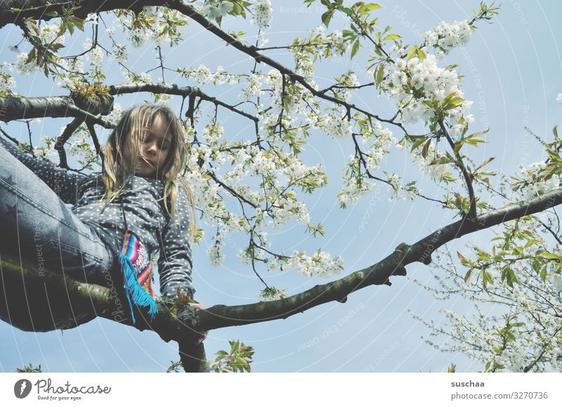 Child Nature Tree Joy Girl Blossom Spring Above Wild Fear Joie de vivre (Vitality) Branch Fear of heights Climbing Brave Self-confident