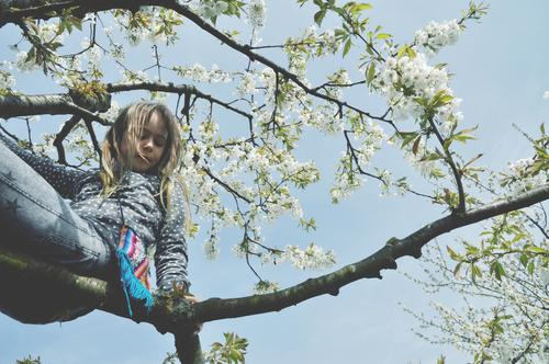 girl sitting on a branch in a spring tree Branch blossom bleed Above Climbing Child boyish Joy Joie de vivre (Vitality) Nature Wild Exterior shot Tree Climbing
