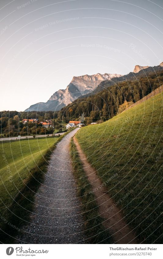 NR 1000 Nature Landscape Green Switzerland Lanes & trails Travel photography House (Residential Structure) Mountain mayfield Heidi Village Grass Walking Future