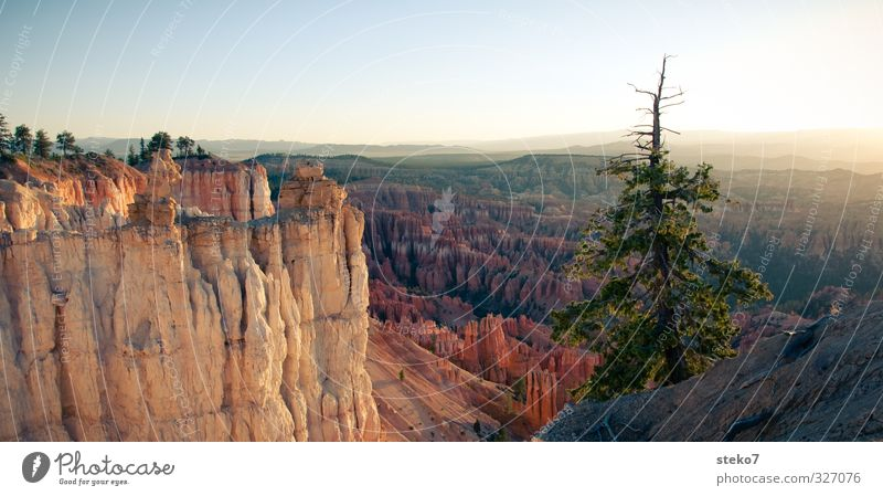 Utah morning II Cloudless sky Tree Rock Mountain Canyon Gold Orange Freedom Horizon Idyll Calm Far-off places Bryce Canyon Pine Colour photo Exterior shot