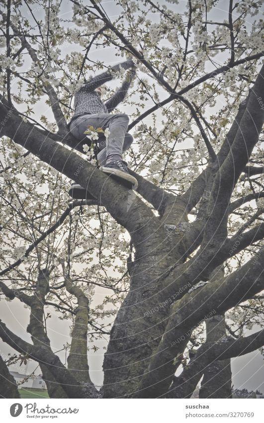 tree climber Tree Branch Tree trunk blossom Spring Above Climbing Child Girl boyish Joy Joie de vivre (Vitality) Nature Wild Exterior shot Tree Climbing Brave