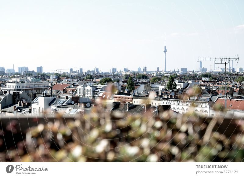 farsighted | over the roofs of Berlin 1 Berlin TV Tower Capital city Downtown House (Residential Structure) High-rise Terrace Roof Antenna Tourist Attraction