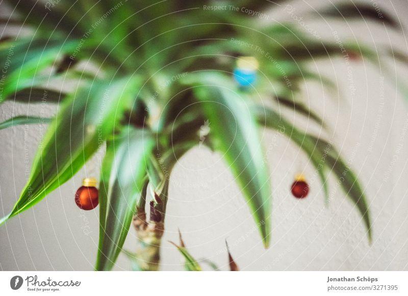 Christmas palm Living or residing Flat (apartment) Christmas & Advent Esthetic Hip & trendy Uniqueness Christmas tree Palm tree Dragon tree Glitter Ball
