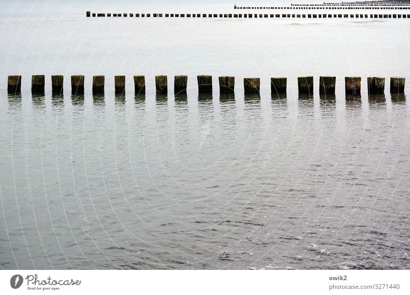 principle of equality Environment Nature Landscape Water Beautiful weather Coast Baltic Sea Break water Wooden stake Many Identity Arrangement Row