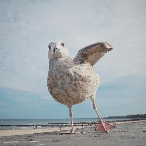 dancing queen Joy Happy Leisure and hobbies Environment Nature Landscape Sky Clouds Horizon Beautiful weather Coast Beach Baltic Sea Seagull 1 Animal Movement