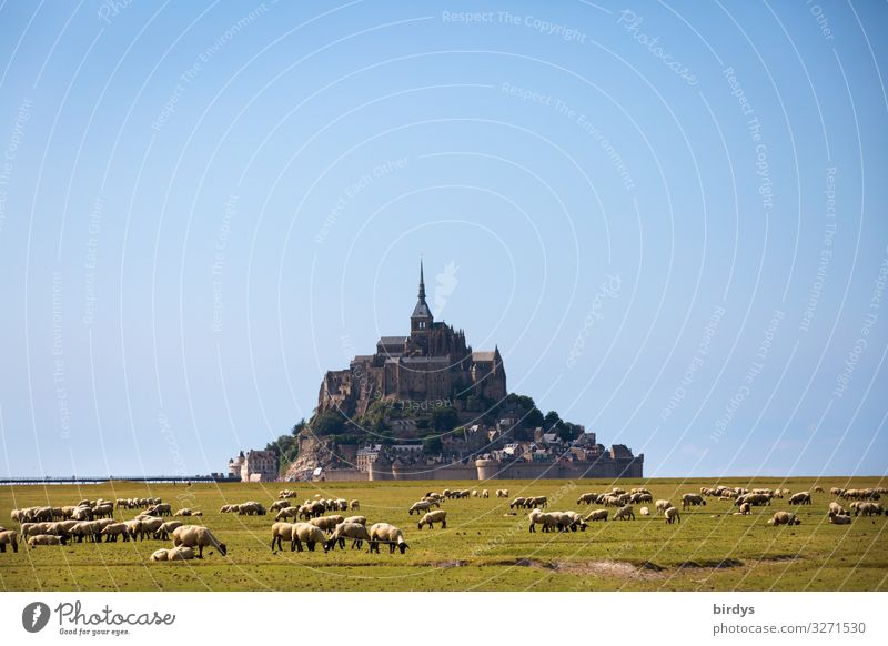 Mont Saint Michel Landscape Cloudless sky Summer Beautiful weather Meadow Hill Rock France Church Tourist Attraction Mont St Michel Farm animal Sheep Herd