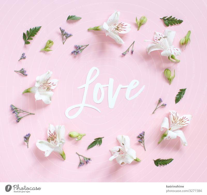 Flowers and word LOVE on a light pink background Woman White Adults Pink Above Design Decoration Creativity Wedding Mother Word Blossom leave Conceptual design