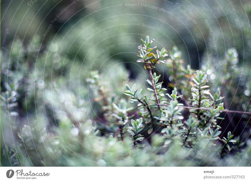 Nature Green Plant Environment Spring Gray Natural Bushes Drops of water