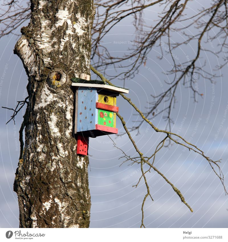 colorful painted birdhouse hanging from a birch trunk Environment Nature Plant Sky Spring Beautiful weather Tree Birch tree Tree trunk Twig Nesting box Wood