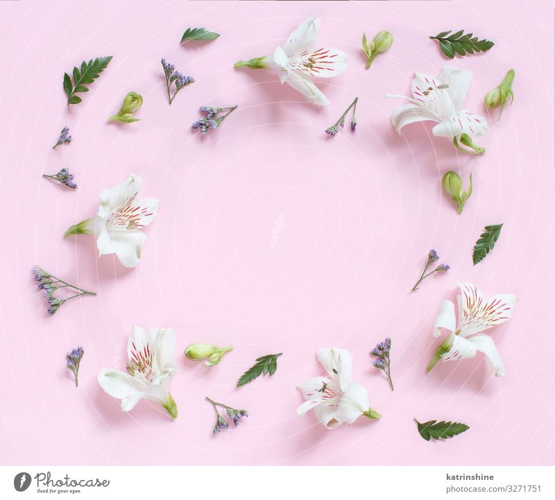 Flowers on a light pink background Woman Adults Copy Space Pink Above Design Decoration Creativity Wedding Mother Conceptual design Floral Engagement
