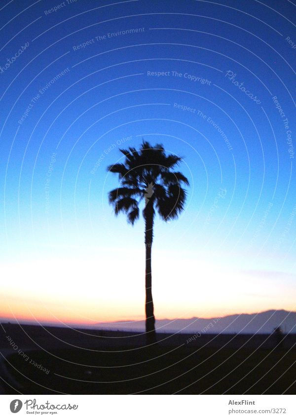 palm Palm tree Dark Reaction Blue Sky