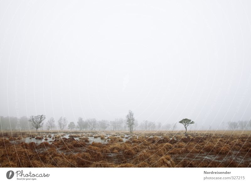 Nature Plant Tree Loneliness Landscape Calm Winter Forest Dark Sadness Autumn Weather Fog Climate Hiking Trip