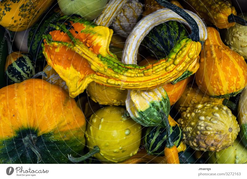 Pumpkin (45%) Food Vegetable Nutrition Farmer's market Organic produce Fresh Healthy Many Colour photo Exterior shot Close-up Deserted