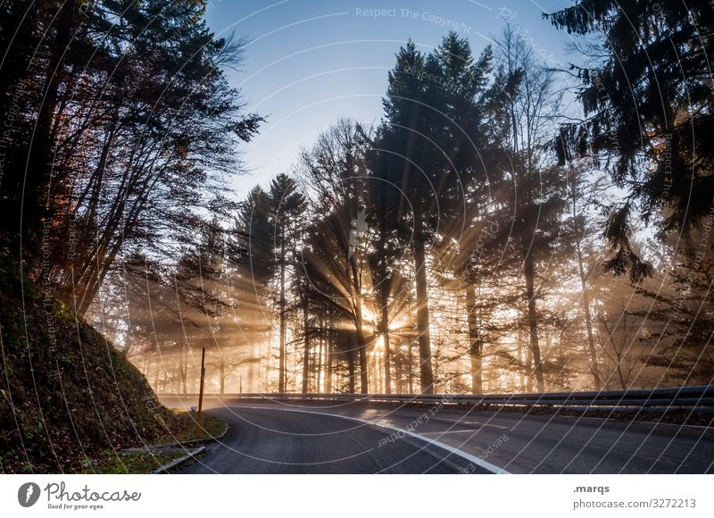 morning sun Nature Cloudless sky Climate Beautiful weather Forest Transport Traffic infrastructure Street Curve Driving Moody Mobility Target Colour photo