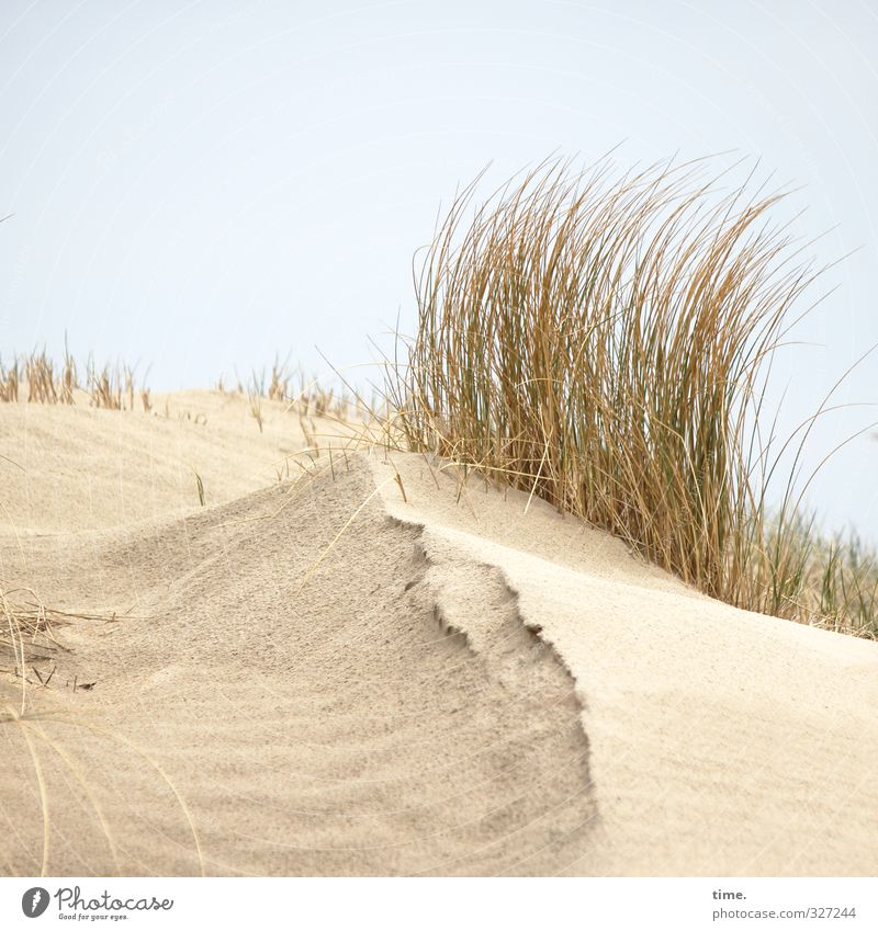 Sky Nature Relaxation Landscape Beach Environment Life Emotions Movement Coast Sand Bright Horizon Authentic Growth Beautiful weather