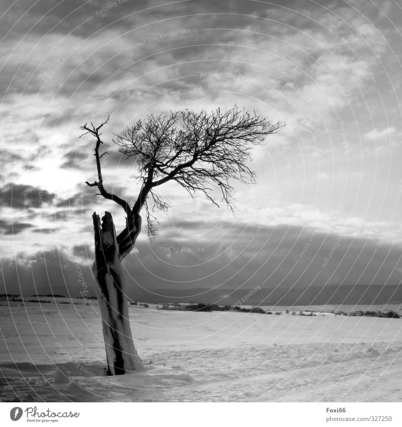 . Landscape Sky Clouds Winter Snow Tree Field Mountain Dark Cold Natural Gloomy Black White Moody Beautiful Calm Loneliness Relationship Uniqueness Emotions