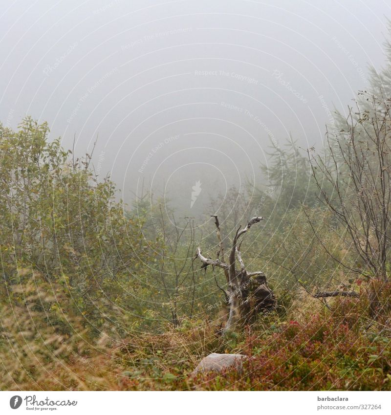 Sky Nature Plant Landscape Environment Emotions Wood Stone Moody Power Wild Fog Climate Growth Bushes Change