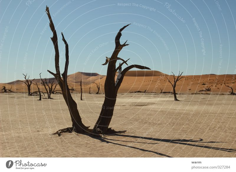 water shortage Far-off places Namibia Namib desert Nature Landscape Earth Sand Cloudless sky Climate change Beautiful weather Warmth Drought Tree Desert Blue