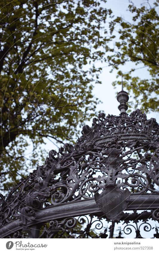 Nature Plant Tree Leaf Metal Esthetic Roof Round Well Kitsch Historic Grating Tendril Ornament Graz Coat of arms