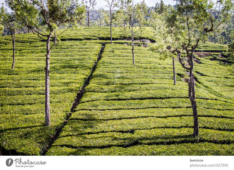Nature Green Tree Landscape Mountain Field Arrangement Hill Agriculture Asia Tea India Tea plants Tea plantation