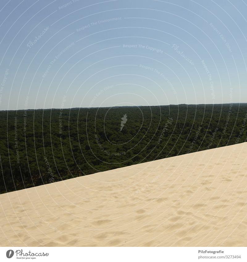 Dune du Pilat Environment Nature Landscape Sand Sky Cloudless sky Tree Forest Beach dune Infinity Blue Brown Green Symmetry Vacation & Travel Footprint