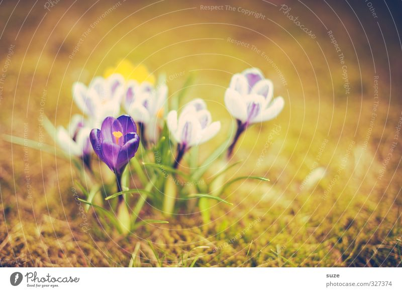 Nature Plant Green Flower Yellow Meadow Spring Blossom Natural Garden Growth Illuminate Authentic Blossoming Change Retro