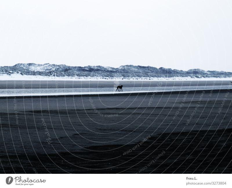 Vacation & Travel Dog Ocean Animal Loneliness Winter Cold Snow Coast Walking Pet Dune North Sea Maritime Bad weather Belgium