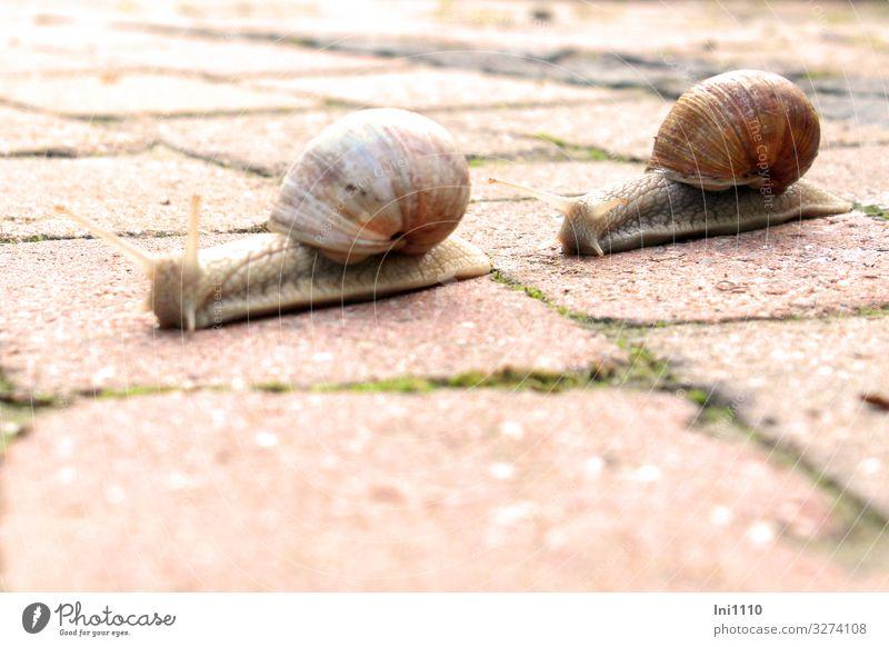 Green White Red Animal Eyes Garden Brown Gray Flat (apartment) Wild animal Animal face Snail Crawl Feeler Slowly Snail shell