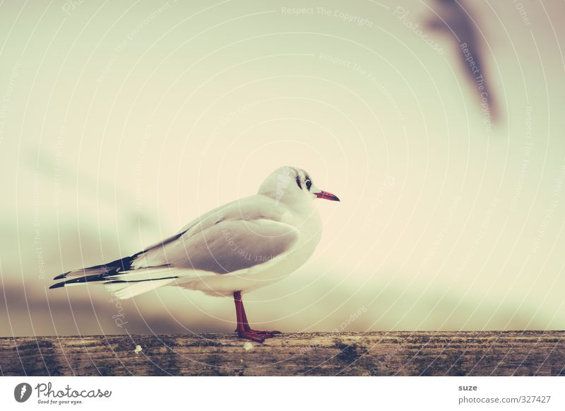 Without you, everything's stupid. Calm Environment Nature Animal Sky Wild animal Bird 1 Wood Stand Wait Bright Small Cute Retro White Longing Wanderlust