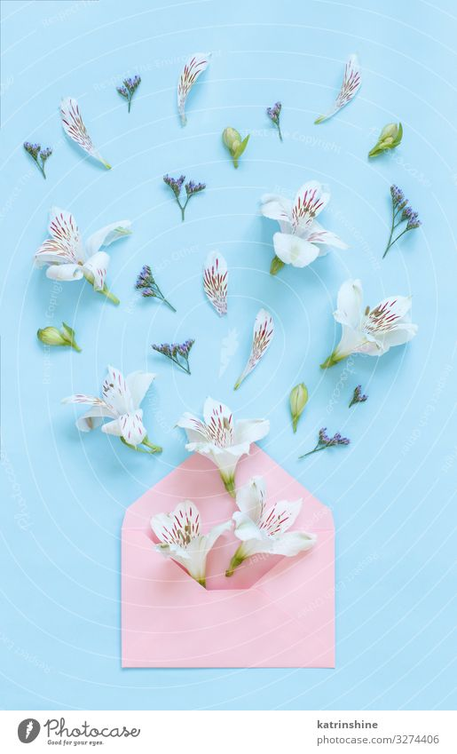 Flowers and envelope on a light pink background Woman Blue White Adults Pink Above Decoration Creativity Wedding Mother Conceptual design Light blue Floral