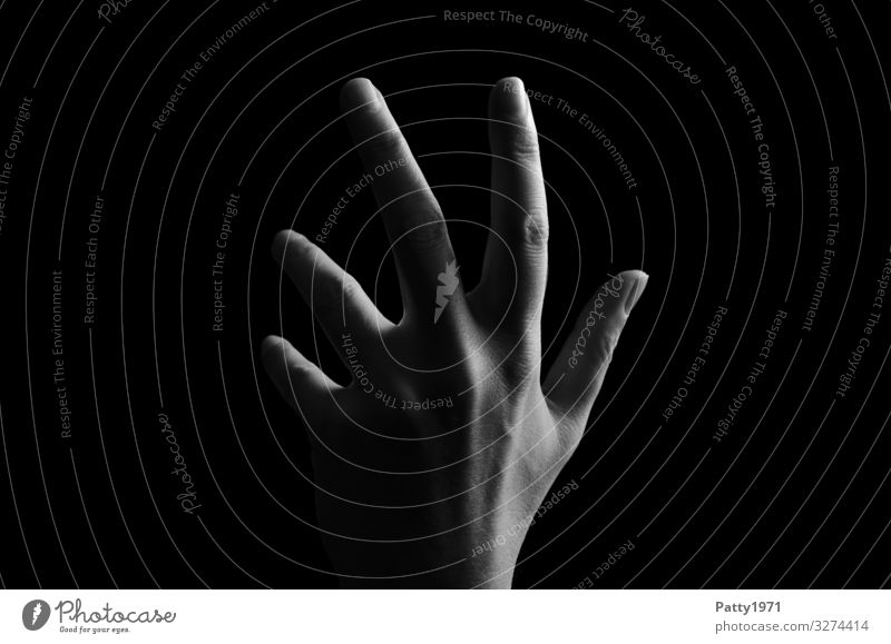 hand Feminine Hand 1 Human being Esthetic Emotions Black & white photo Close-up Detail Copy Space left Copy Space right Neutral Background Light Shadow Contrast