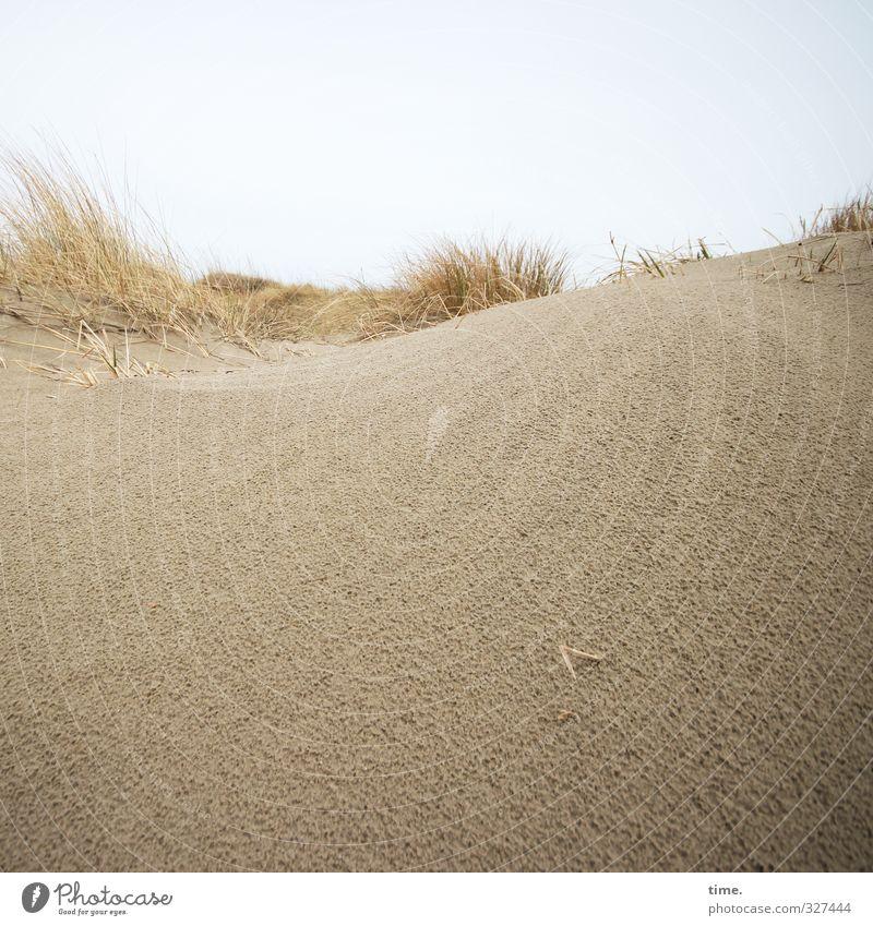 Rømø | Hinterland Environment Nature Landscape Sand Sky Horizon Coast Beach North Sea Dune Marram grass Cold Natural Soft Brown Yellow Secrecy Beautiful